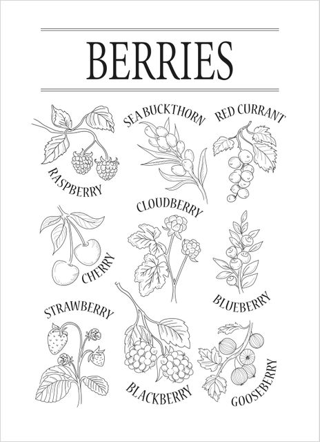Berries black & white poster