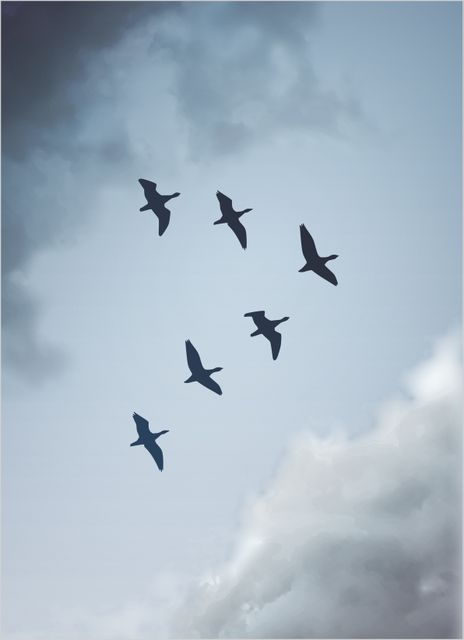 Birds and blue sky poster
