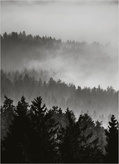 Foggy trees poster