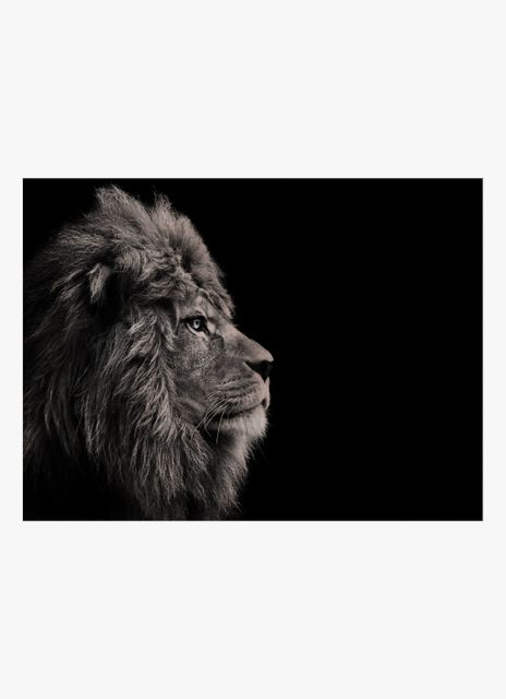 Lion from side poster
