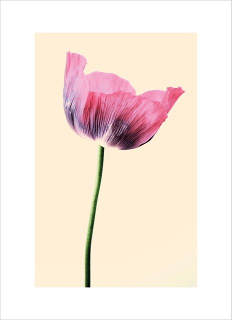 Fin rosa blomma poster