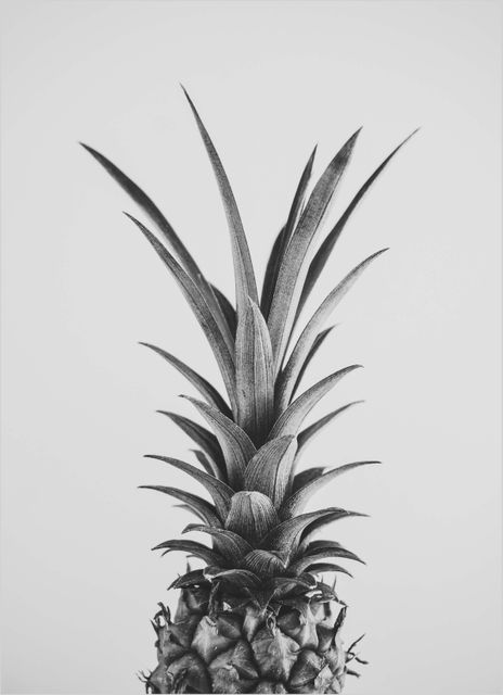 Pineapple black and white poster