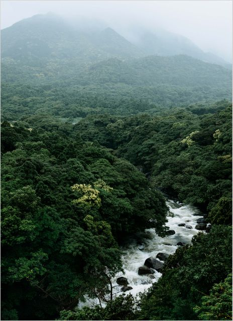 River green forest japan poster