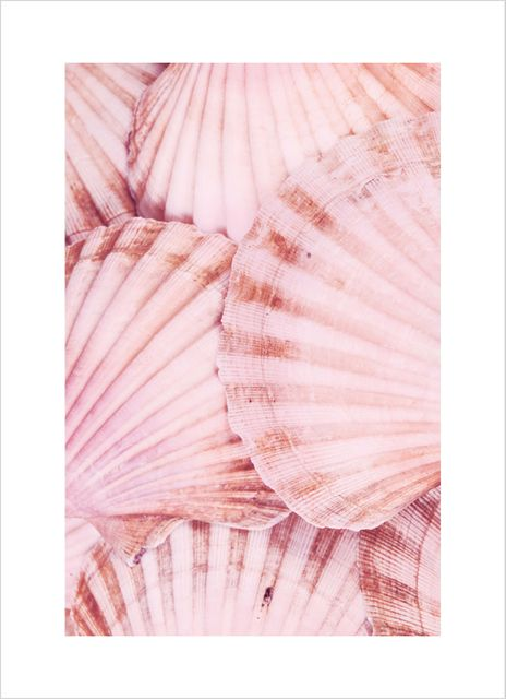 Shells scalloops poster
