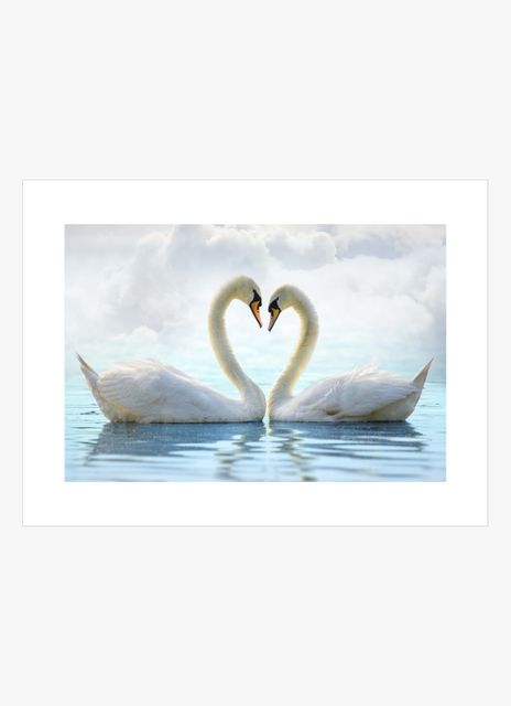 Swan heart poster