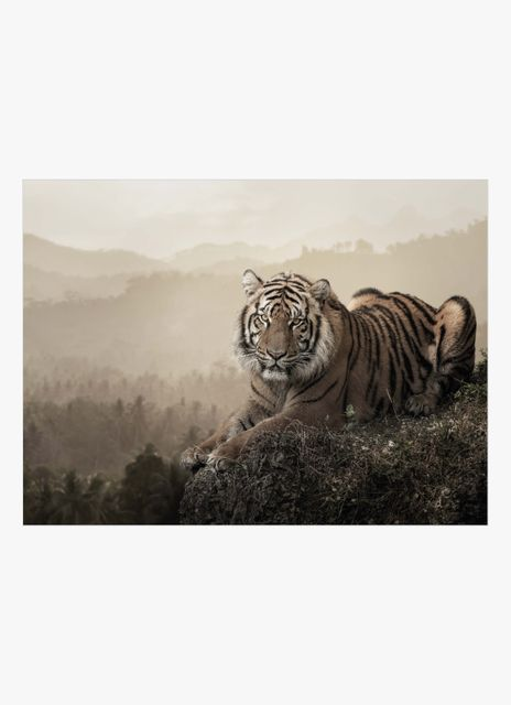 Tiger on a rock