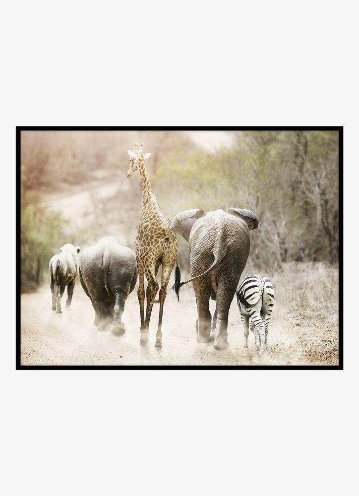 Djur safari poster