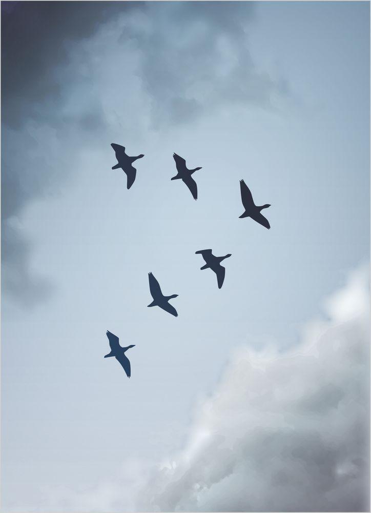 Fåglar och himmel poster