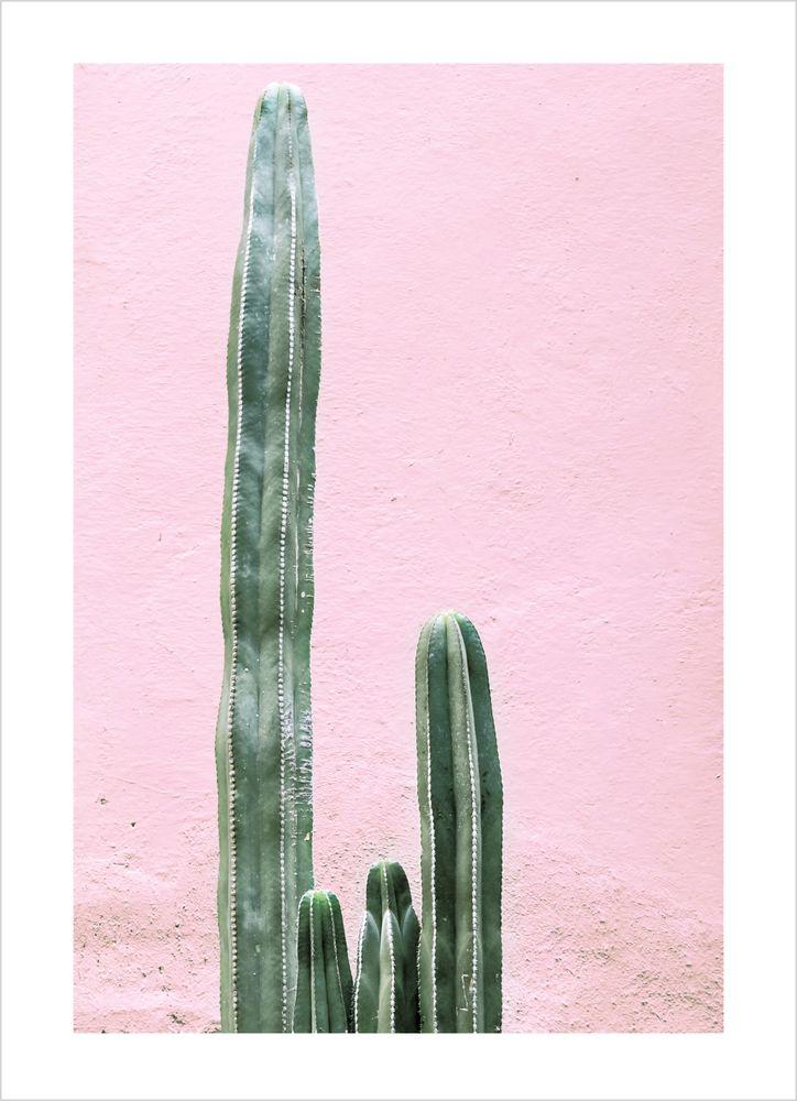 Kaktus mot rosa vägg poster