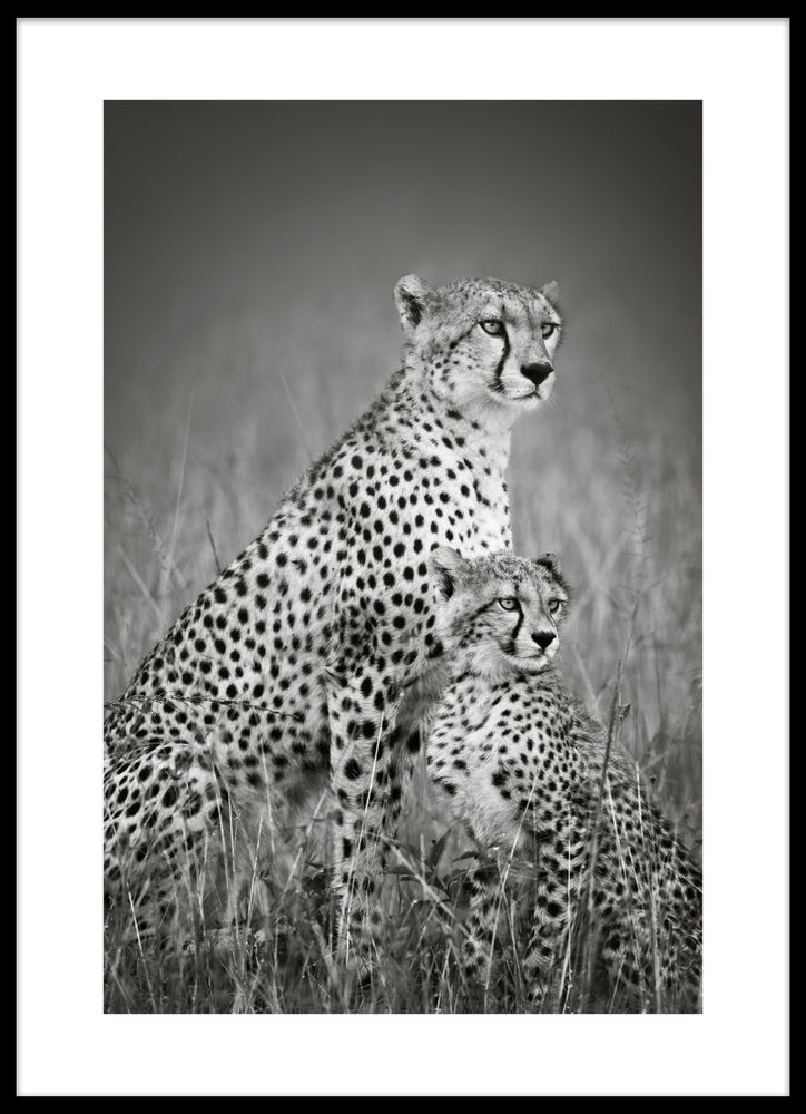 Leopard med unge poster