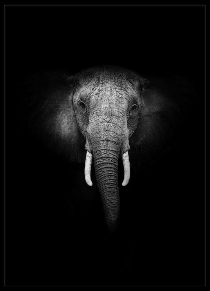 Elefant svart poster
