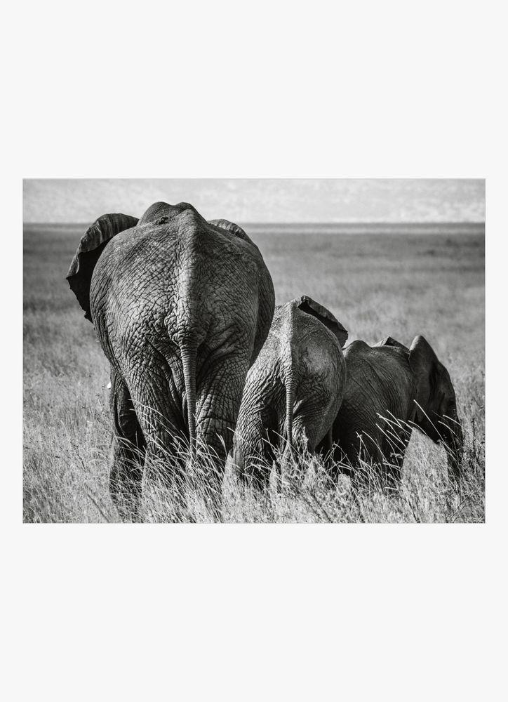 Elefant med unge poster
