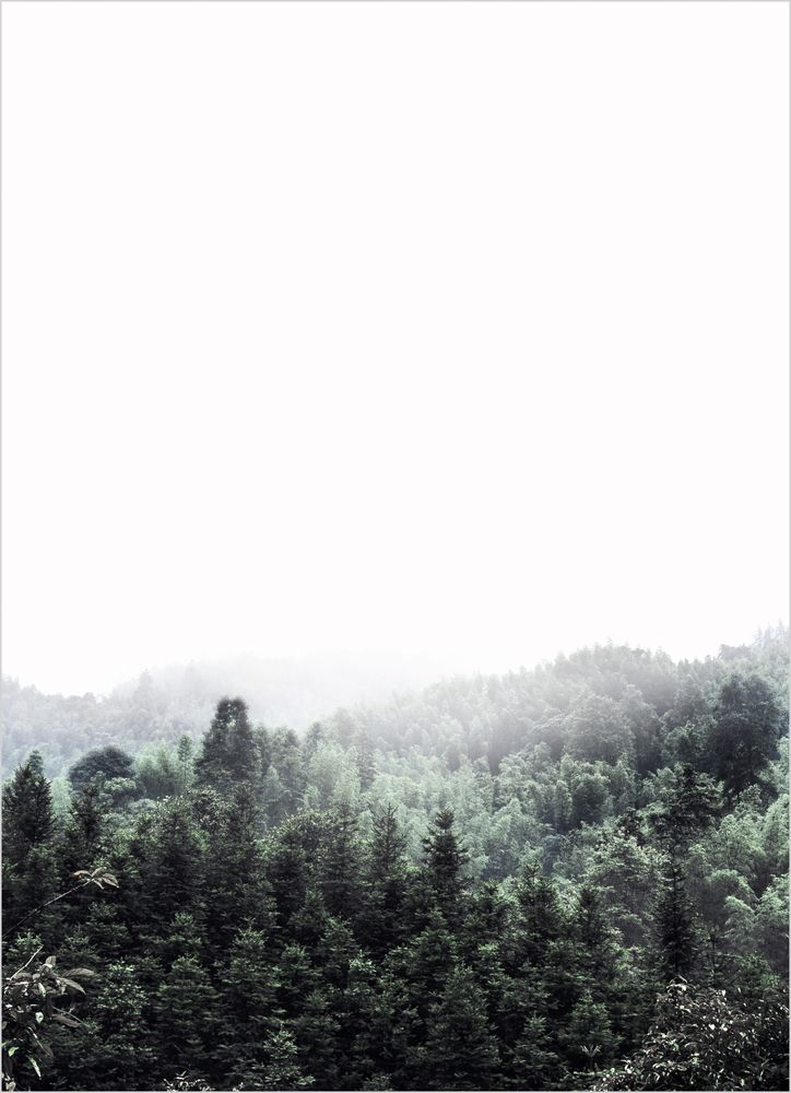 Skog dimma poster