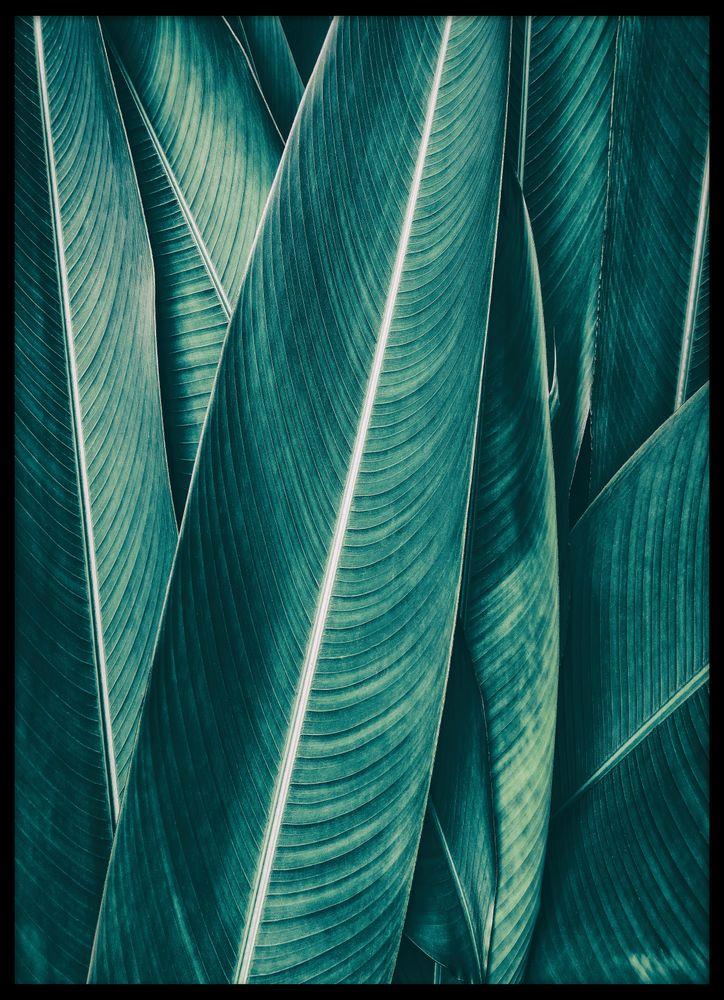Monstera blad grön poster