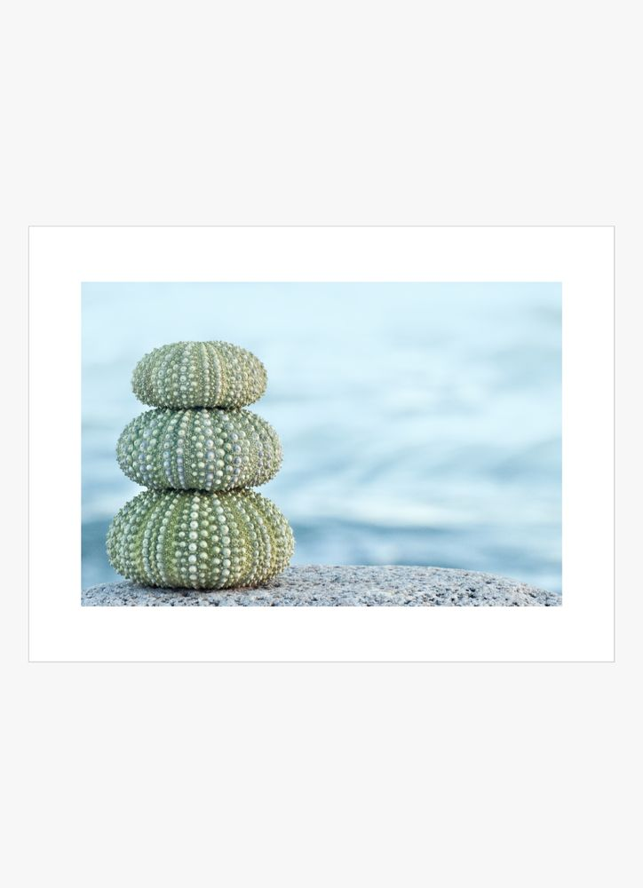 Green sea urchins poster