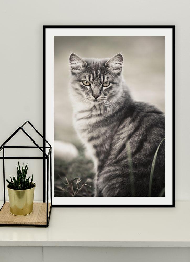 Katt grå poster