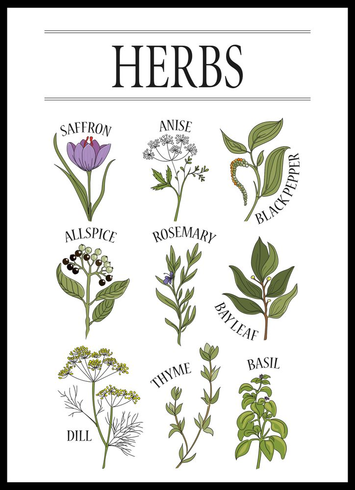 Herbs poster