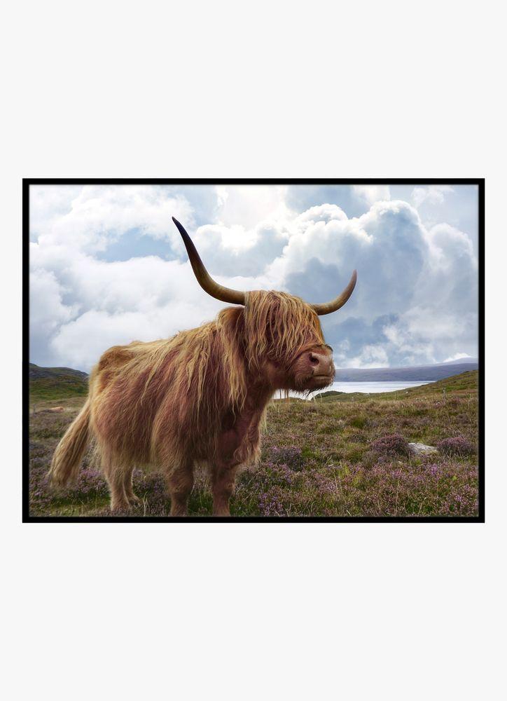 Highland boskap poster