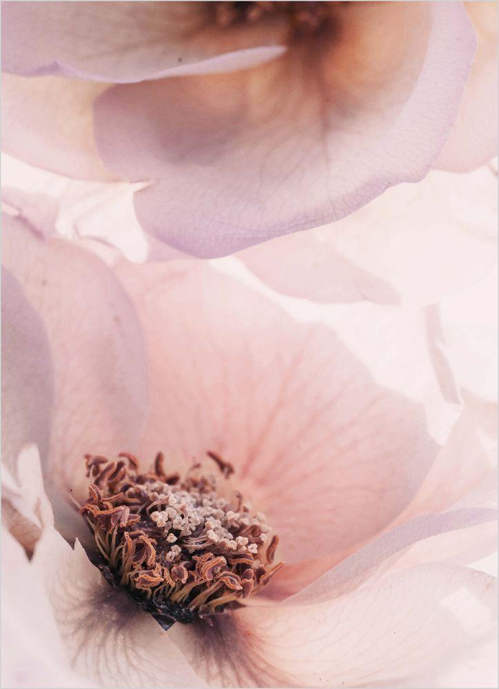 Vackra rosor poster