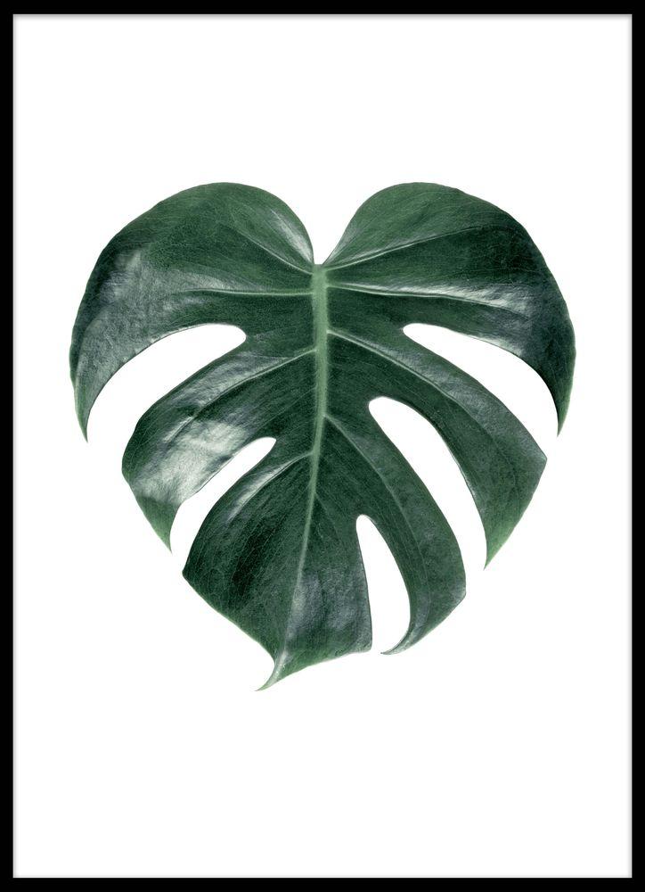 Monstera palm singel poster