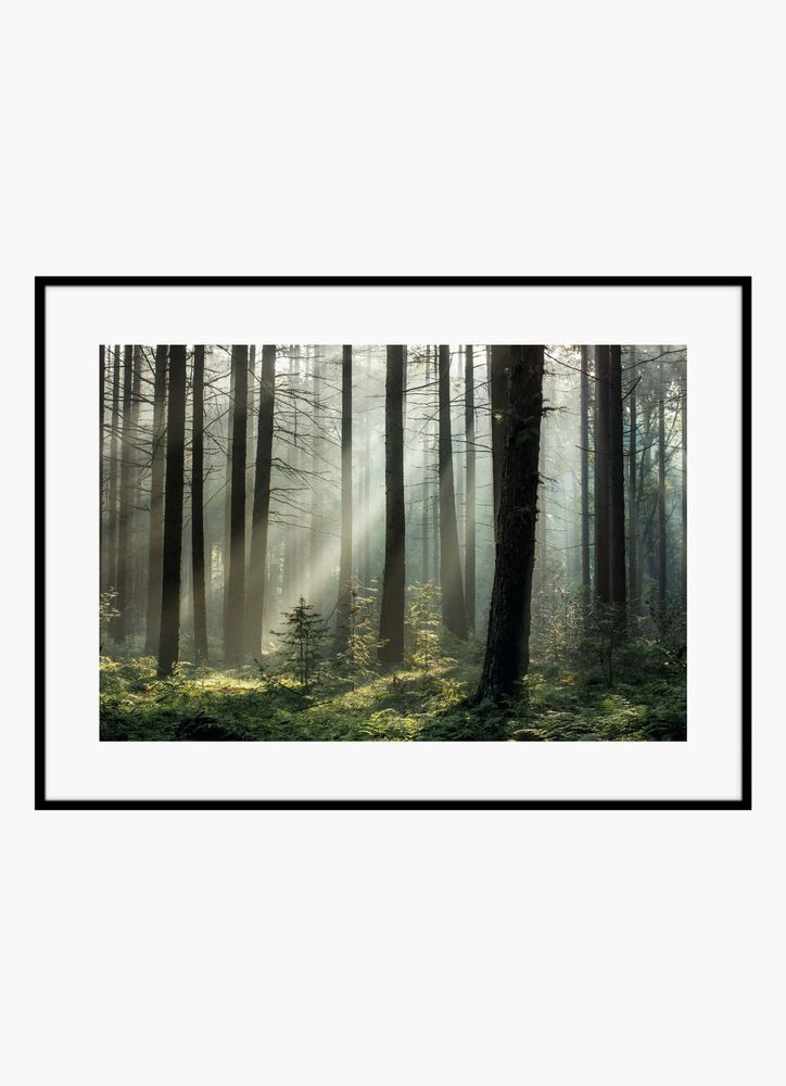Morning forest poster