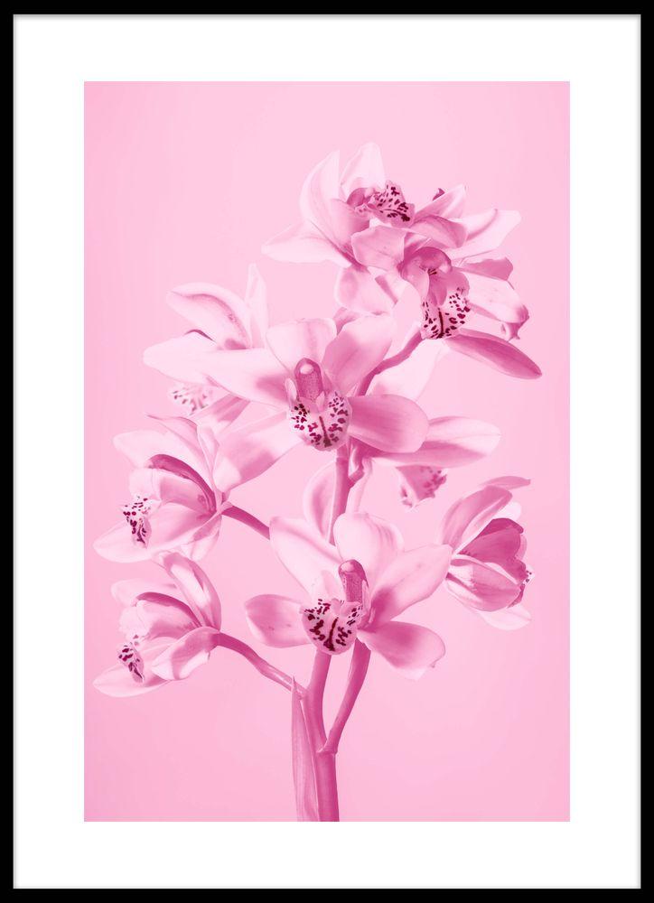 Rosa orkidé poster