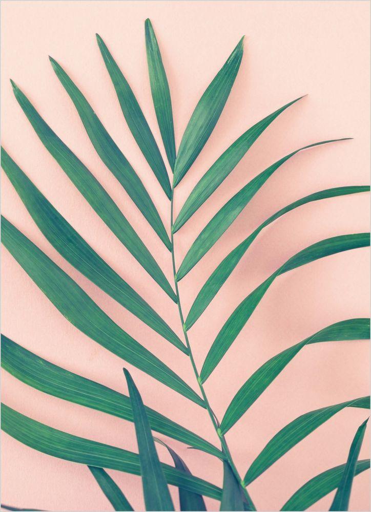 Palm leaf pink background poster
