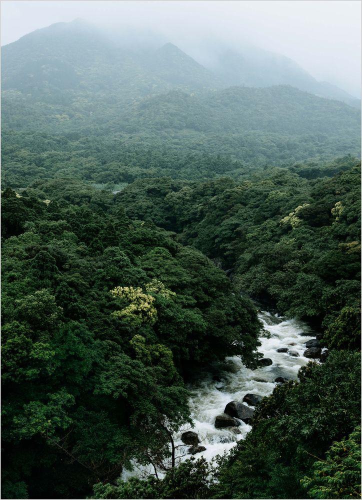 Flod genom skog i japan poster