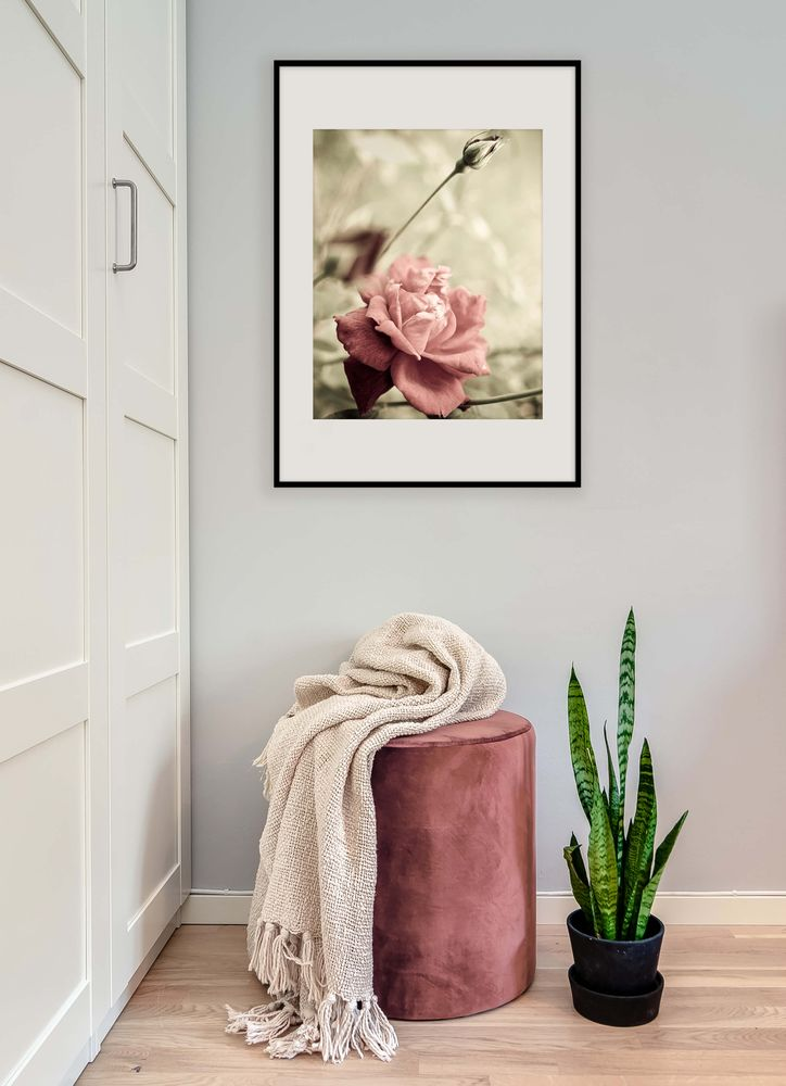 Rose in the garden poster