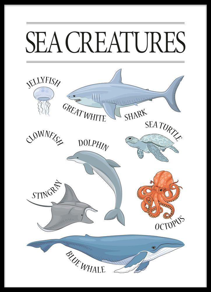 Djur i havet poster