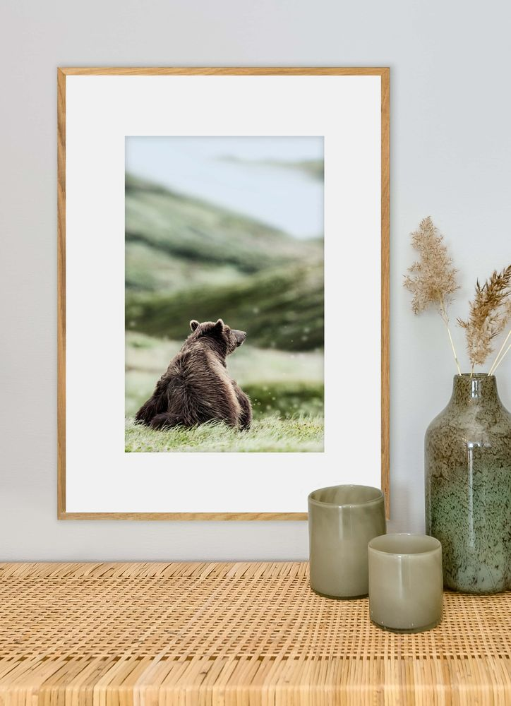 Sittande björn poster