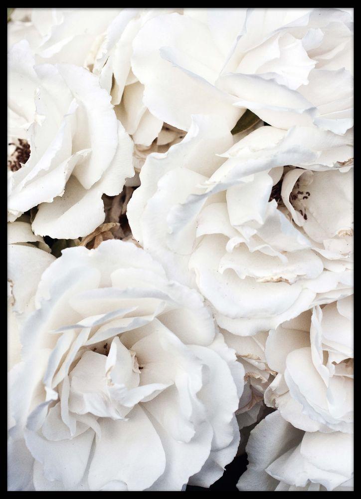 Vita blommor poster