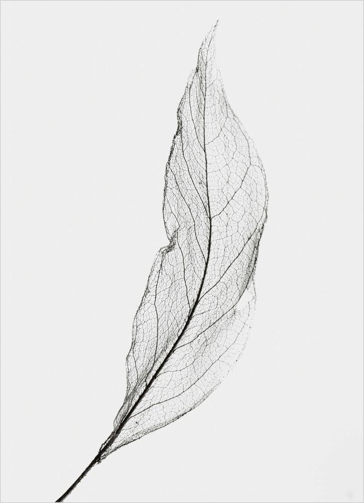 Löv vit poster