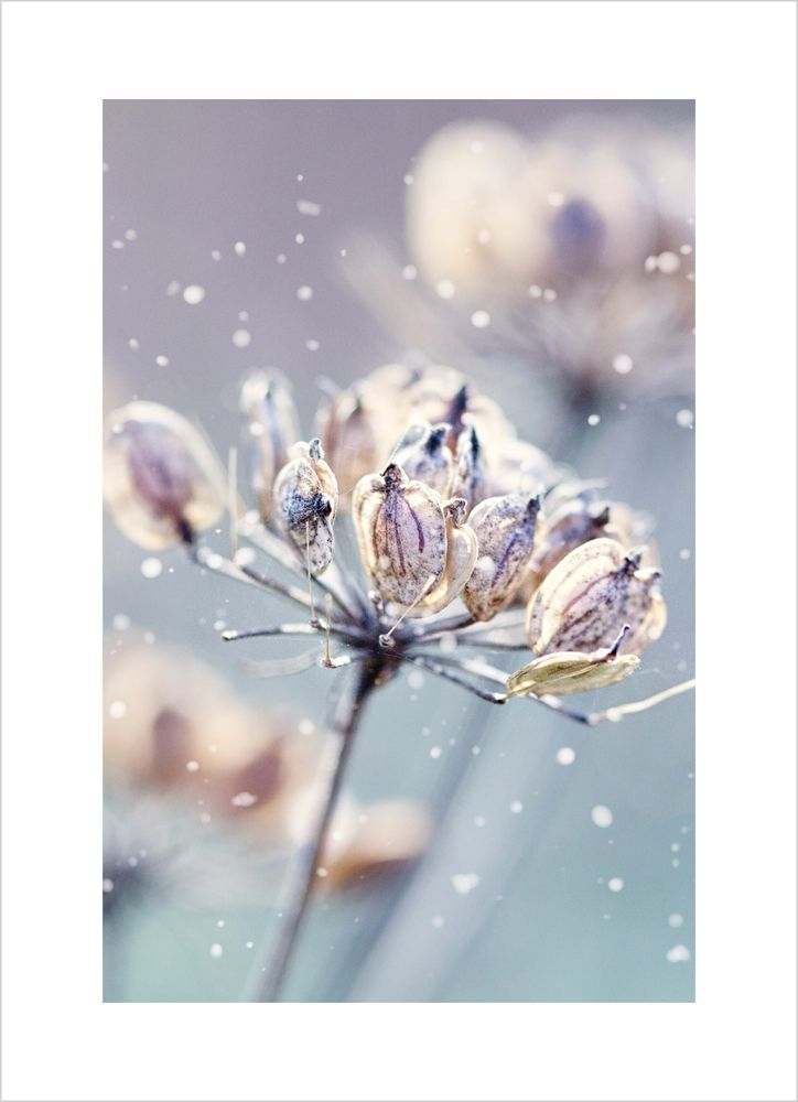 Blomma vinter poster
