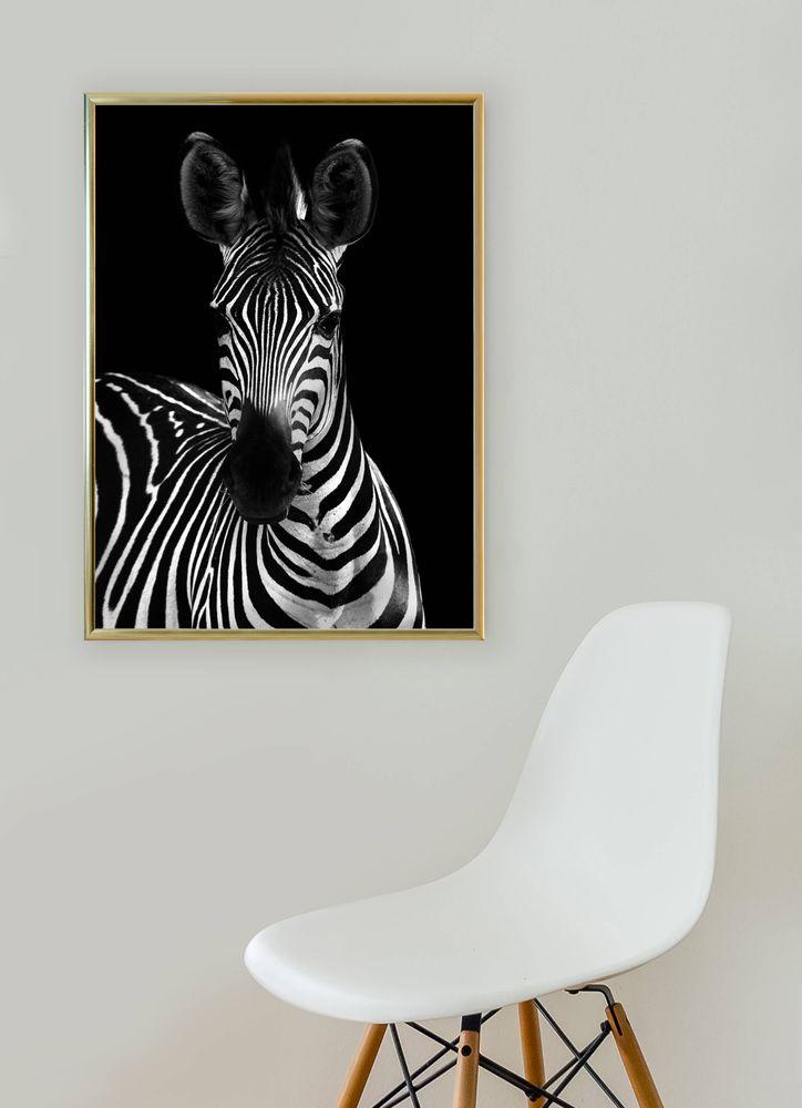 Zebra framifrån poster