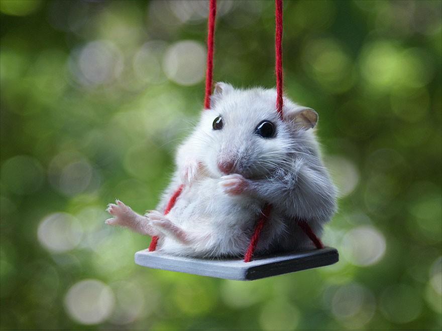 Söt hamster