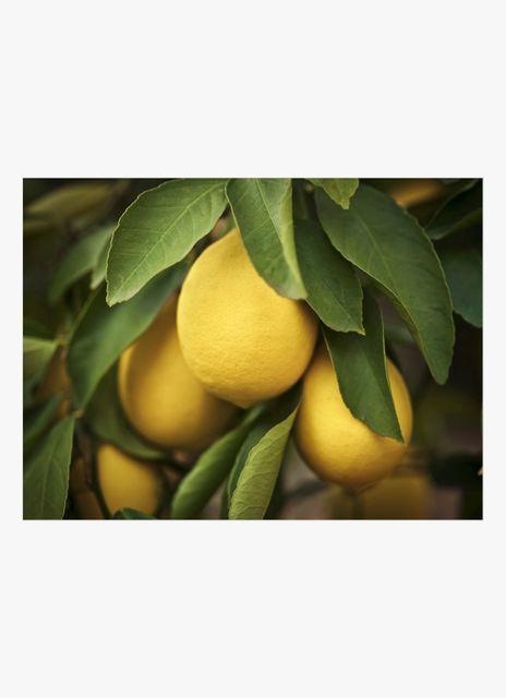 Citroner poster