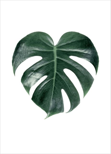 Monstera palm singel poster