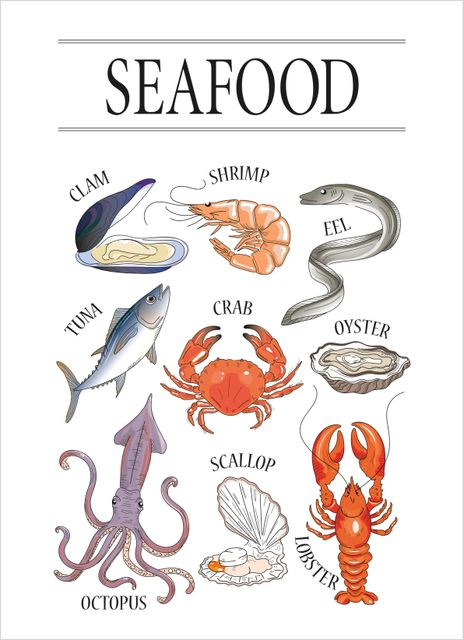 Poster Fisk och Skaldjur