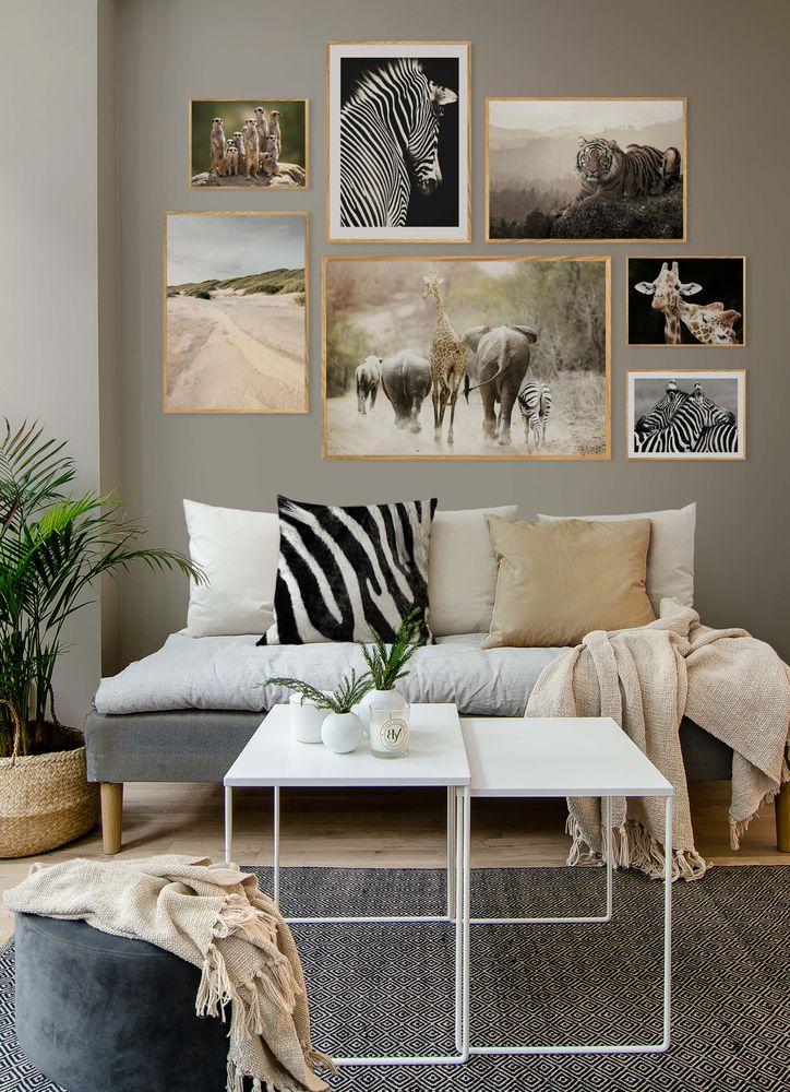 Zebra kram poster