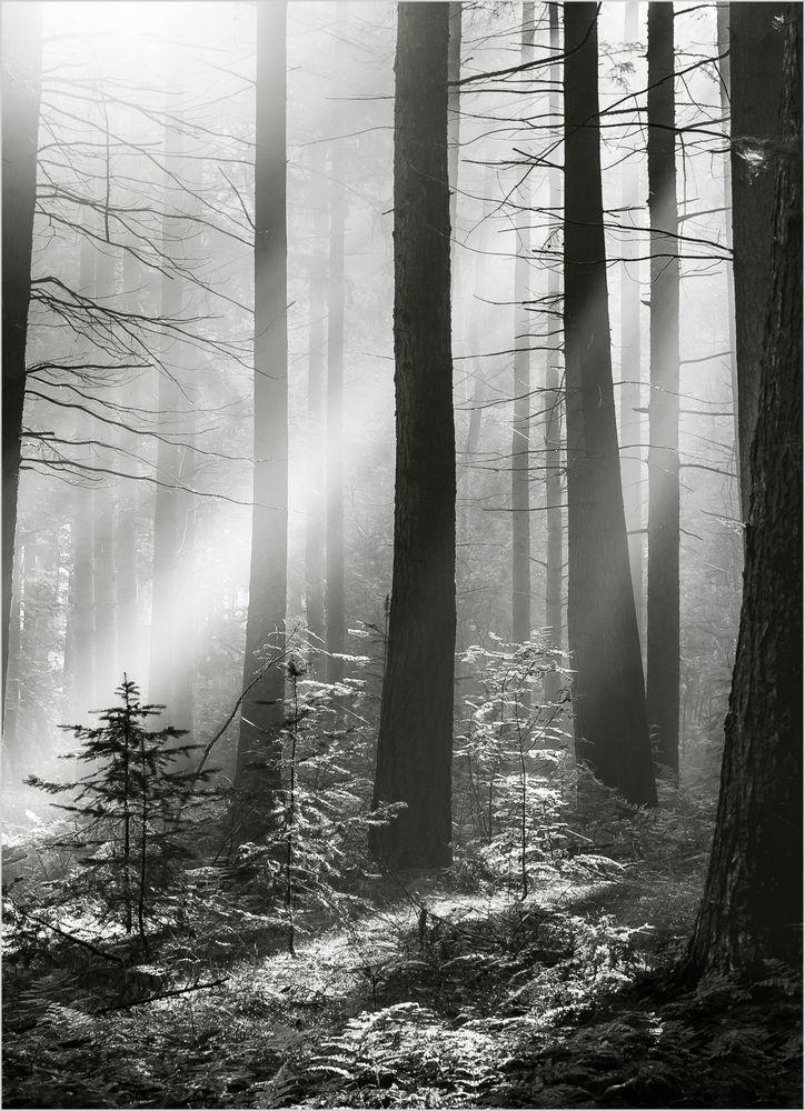 Svart skog poster