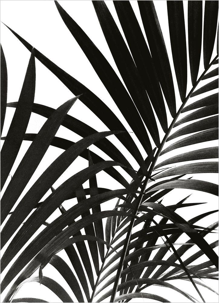 Svarta palmblad poster