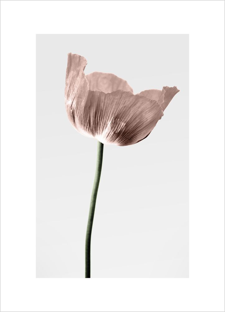 Blomma ljusgrå bakgrund poster