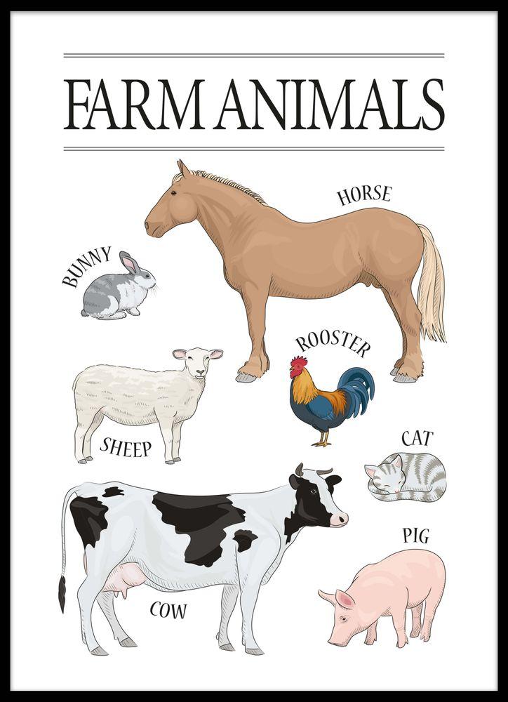 Djur bondgård poster