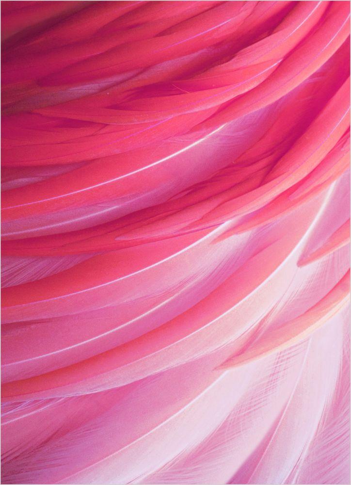 Flamingo fjäder poster