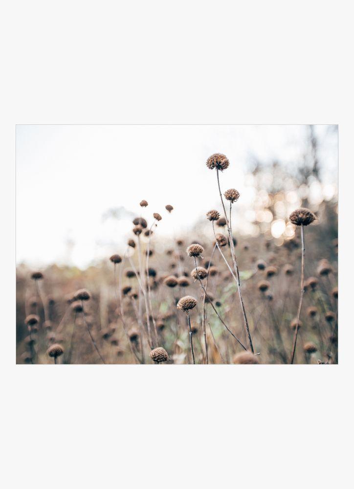 Trädgård blommor poster