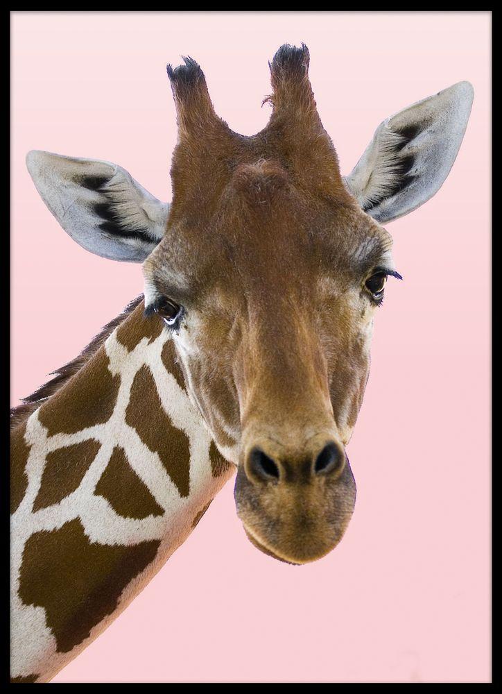 Giraff från sidan poster