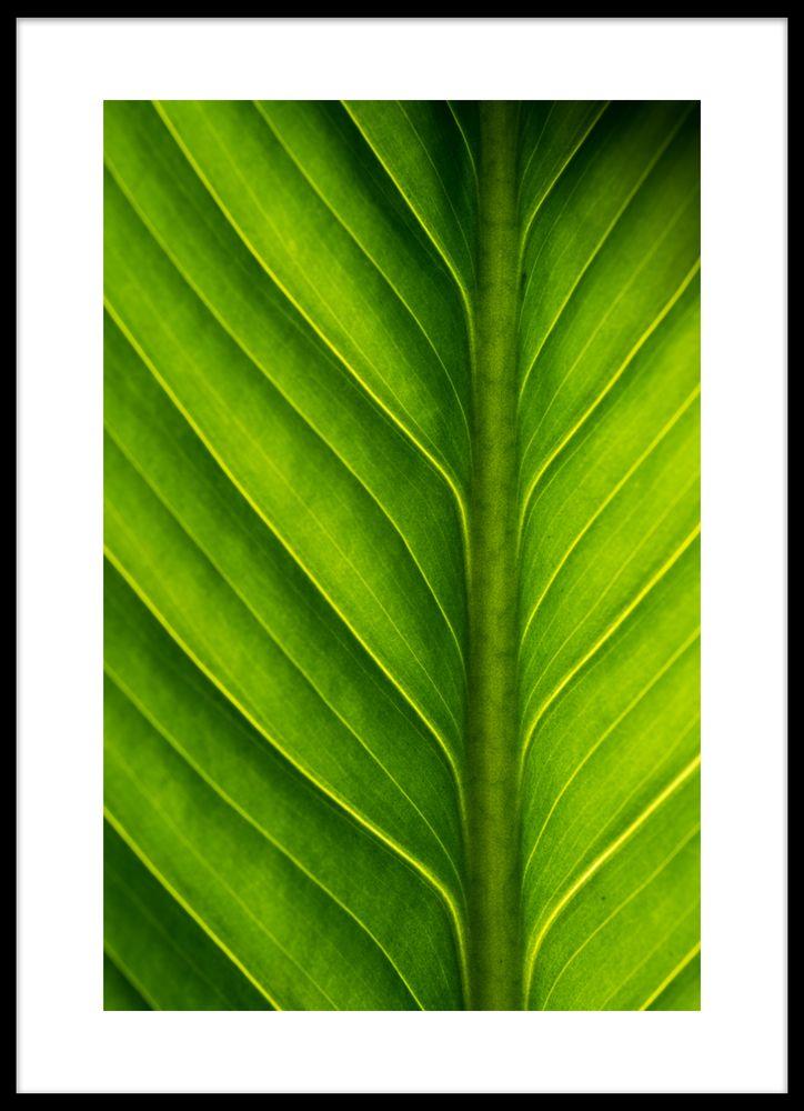 Blad grönt poster