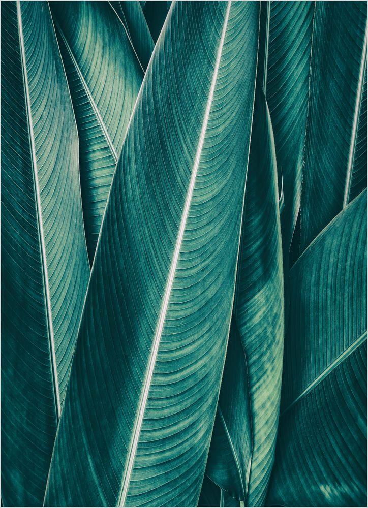 Gröna Blad Poster