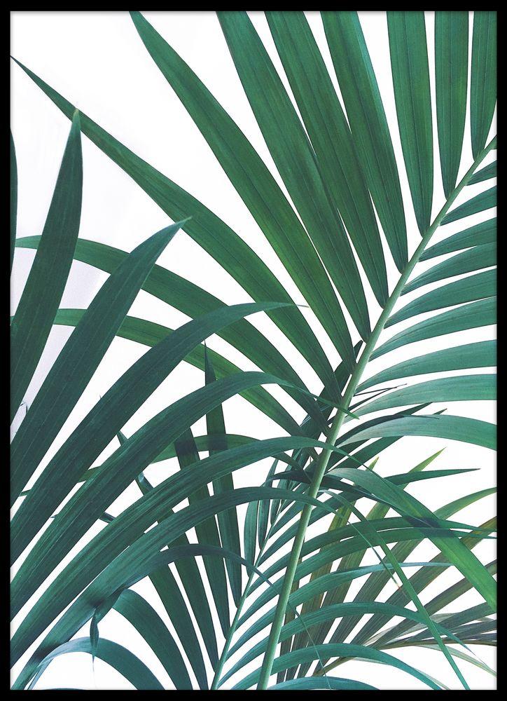 Gröna palmblad poster